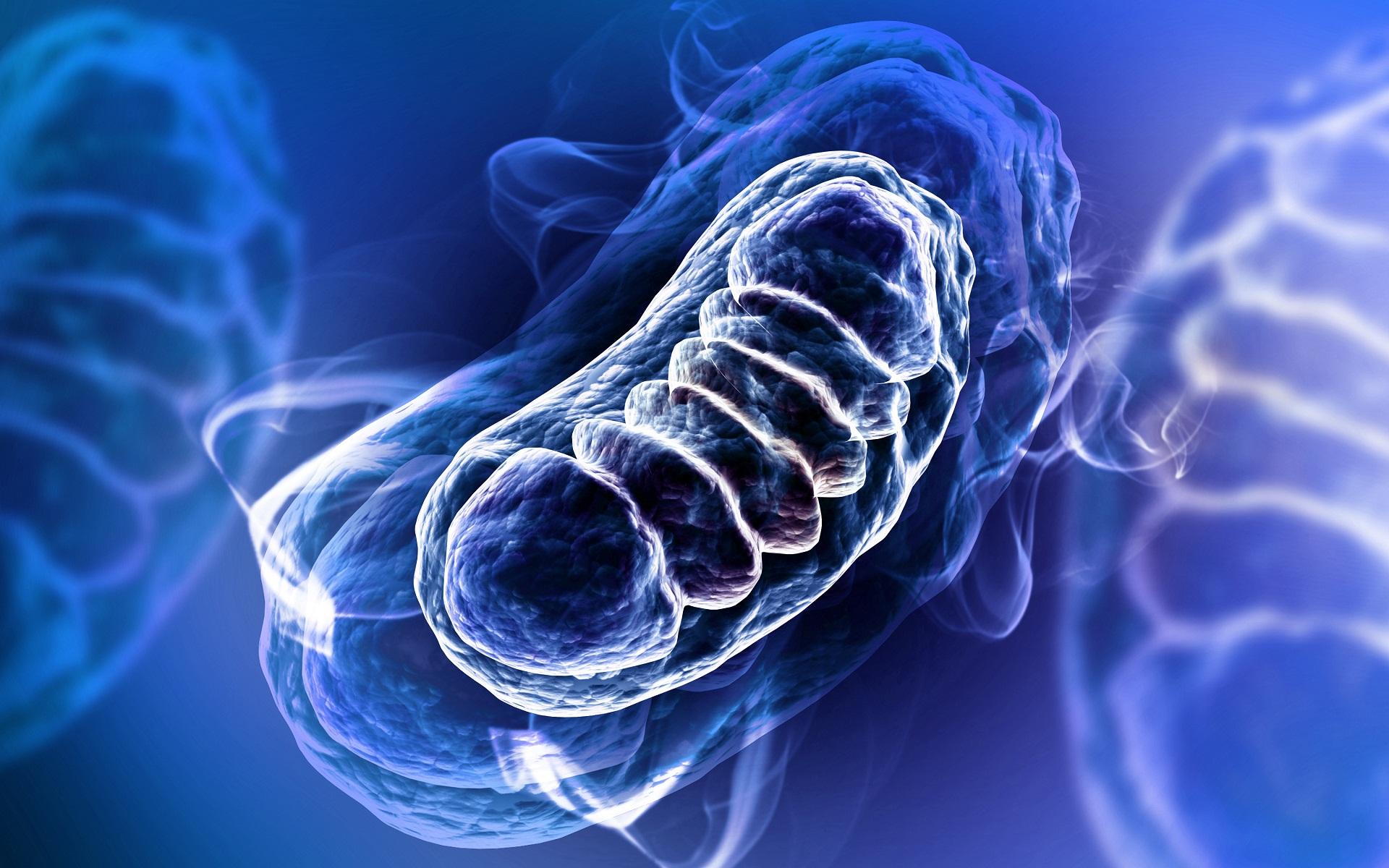Mutação do DNA mitocondrial doença mitocondrial mDNA alteração no movimento diabetes insuficiência renal involução neuropsicomotora convulsão epilepsia
