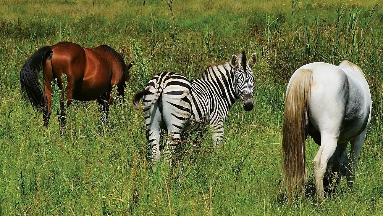Doença zebra: quando o diagnóstico não é tão simples.
